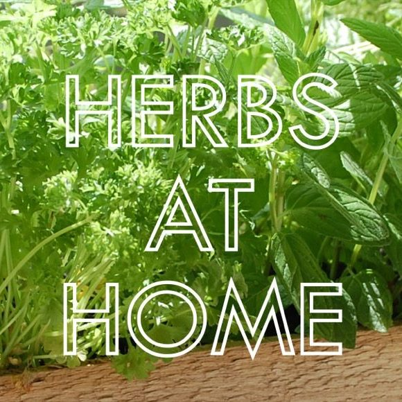 Blogs Herbs at Home